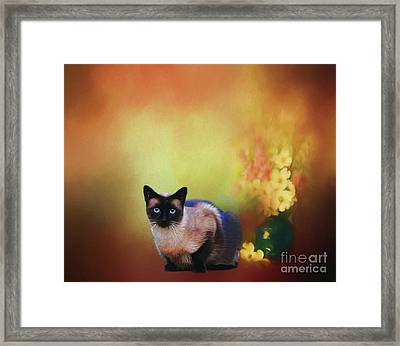 Siamese If You Please Framed Print by Suzanne Handel