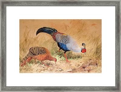 Siamese Pheasant  Framed Print by Joseph Wolf