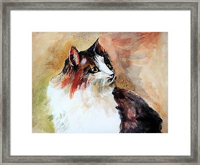 Siberian Forest Cat Framed Print