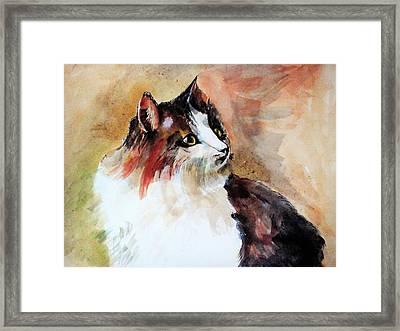 Siberian Forest Cat Framed Print