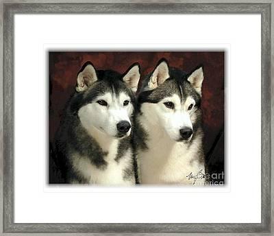 Siberian Huskies Related Framed Print by Maxine Bochnia