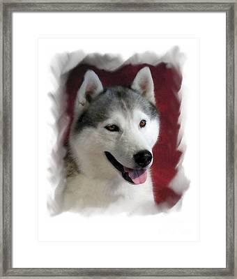 Siberian Husky 903 Framed Print by Larry Matthews