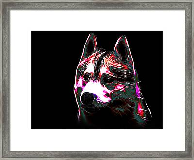 Siberian Husky Framed Print by Alexey Bazhan
