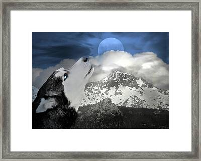 Siberian Husky And Blue Moon Framed Print