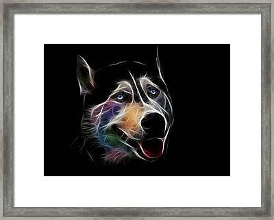 Siberian Husky Framed Print