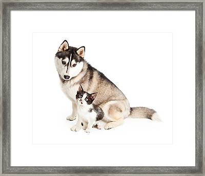 Siberian Husky Dog Sitting With Little Kitten Framed Print