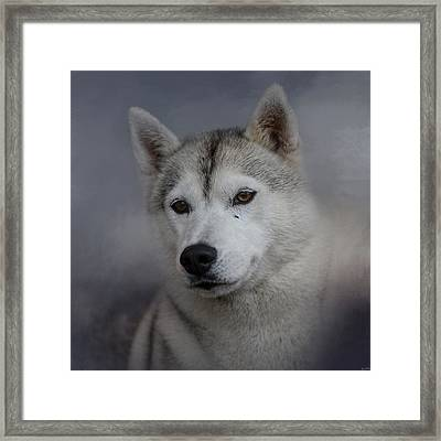 Siberian Husky Framed Print by Jai Johnson