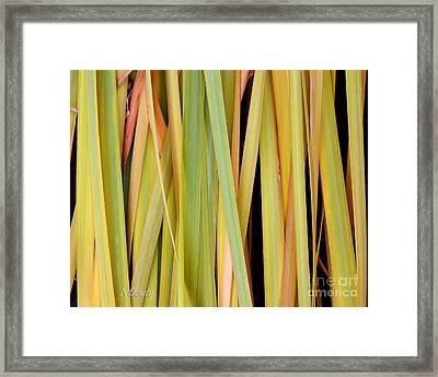 Siberian Iris In Winter Framed Print