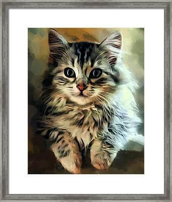 Siberian Kitten Portrait Framed Print by Scott Wallace