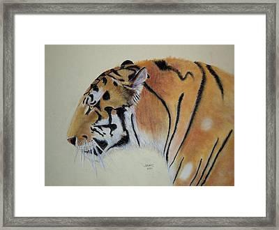 Siberian Tiger Framed Print by Joanne Giesbrecht