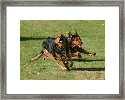 Sibling Rivalry Framed Print