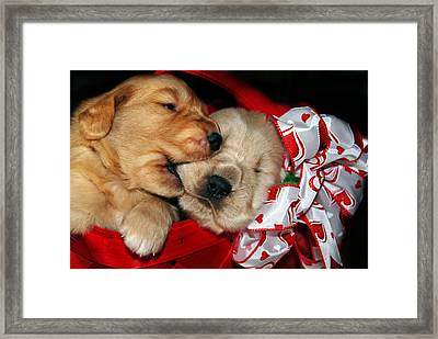 Sibling Rivalry Framed Print by Maria Dryfhout