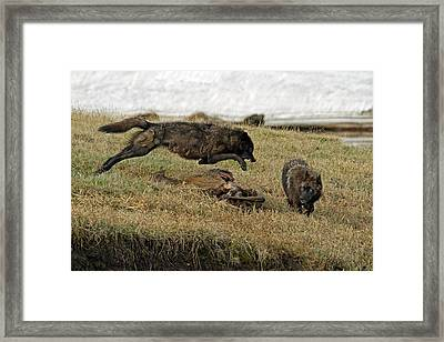 Sibling Rivalry Framed Print by Sandy Sisti