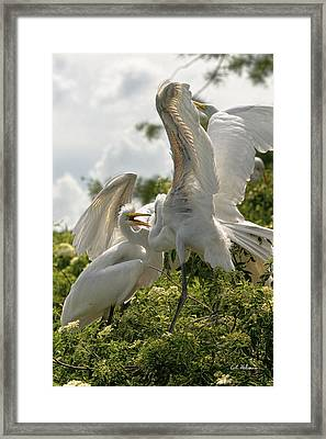 Sibling Squabble Framed Print by Christopher Holmes