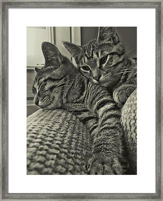 Siblings Framed Print by JAMART Photography