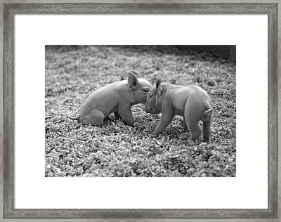 Siblings Framed Print
