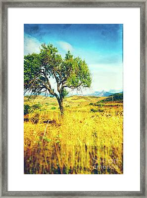 Sicilian Landscape With Tree Framed Print by Silvia Ganora