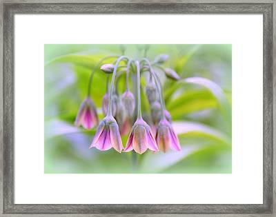 Sicilian Spice Lily Framed Print by Jessica Jenney