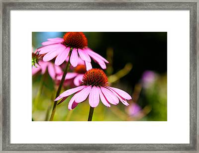 Framed Print featuring the photograph Side By Side by Gary Smith