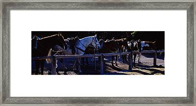 Side Profile Of Five Horses, Us Glacier Framed Print by Panoramic Images