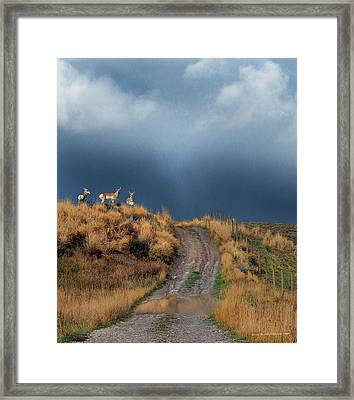 Side Road In Idaho With Pronghorn  Framed Print
