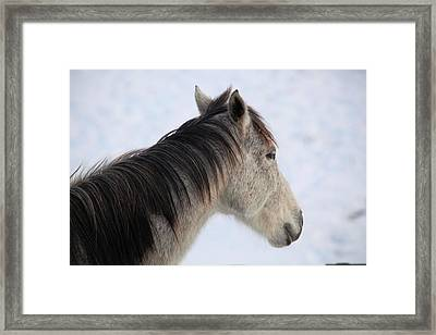 Side View Framed Print