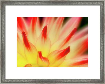 Side View Framed Print by Greg Nyquist