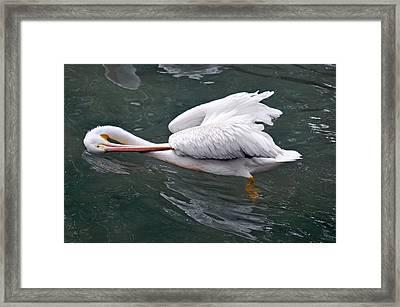 Sidestroke Framed Print by Teresa Blanton