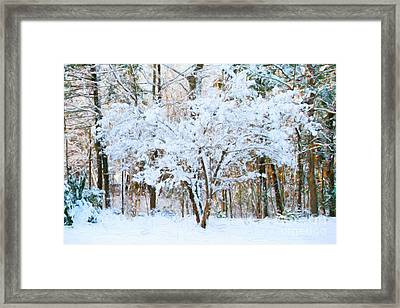Siebold Viburnum In Snow Framed Print