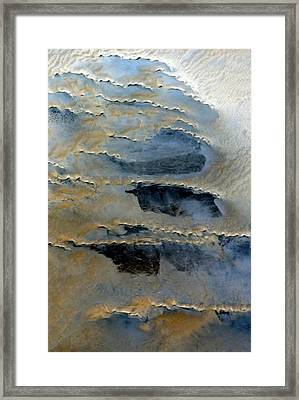 Sienna And Whales From Above Framed Print