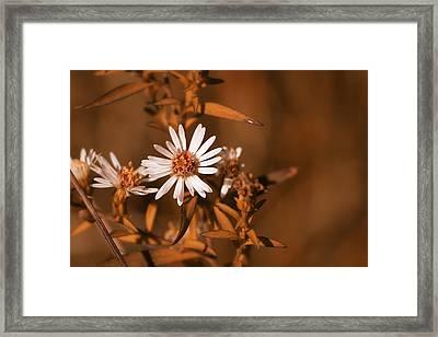 Sienna Glow Framed Print