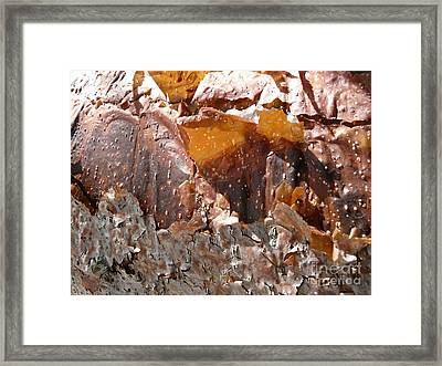 Sienna Serenade Framed Print by Donna McLarty