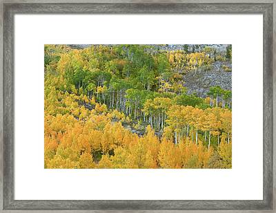 Sierra Autumn Colors Framed Print by Ram Vasudev