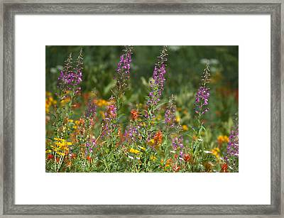 Sierra Bouquet Framed Print by Soli Deo Gloria Wilderness And Wildlife Photography