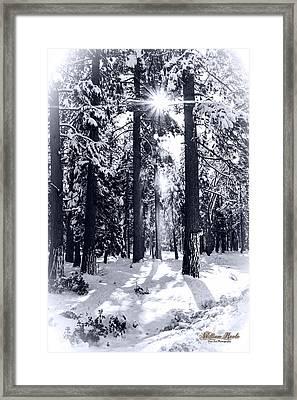 Sierra Forest Show Framed Print