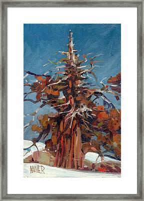 Sierra Juniper Framed Print by Donald Maier