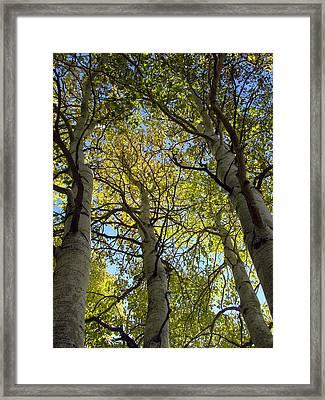 Sierra Nevada Aspen Fall Color Framed Print by Scott McGuire