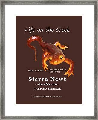 Sierra Newt - Color Newt - White Text Framed Print
