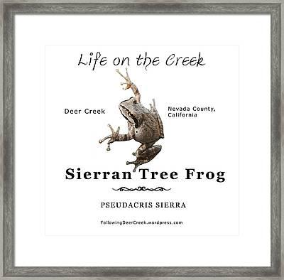 Sierran Tree Frog - Photo Frog, Black Text Framed Print