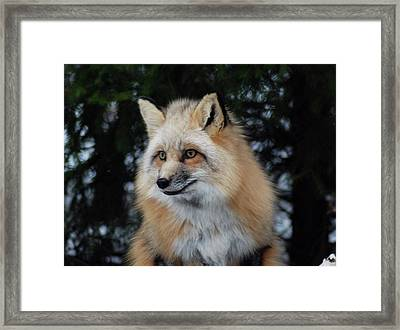 Framed Print featuring the photograph Sierra's Profile by Richard Bryce and Family