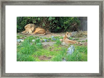 Siesta Time Framed Print by Suzanne Gaff