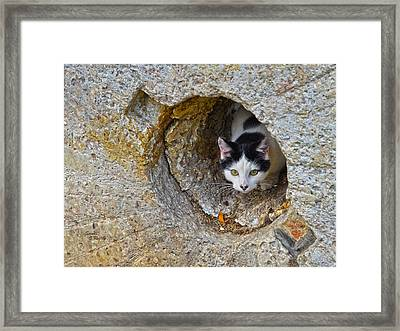 Sifter The Cat Inside Old Millstone Framed Print