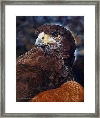 Sig The Harris Hawk Framed Print