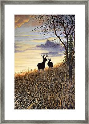 Sigh Whitetail Deer Framed Print