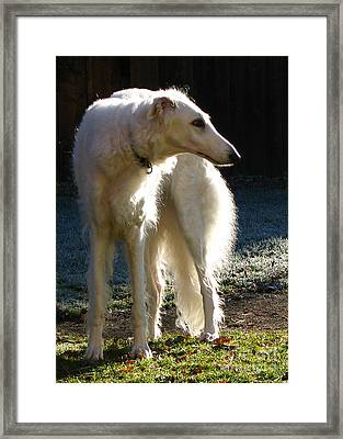 Sighthound Framed Print by Deborah Johnson