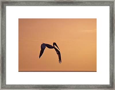Sights That Delight Framed Print