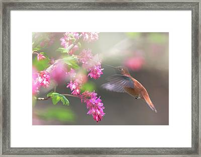 Sign Of Spring 2 Framed Print by Randy Hall