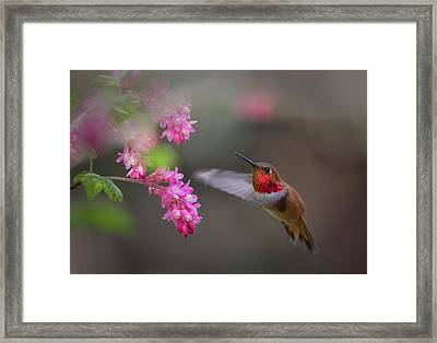 Sign Of Spring Framed Print by Randy Hall