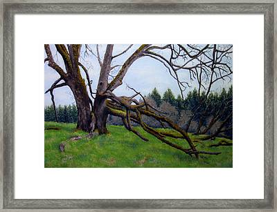 Signature Oak Framed Print by Carl Capps