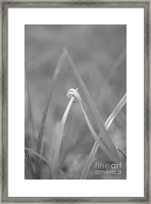 Signed By Nature 10 Framed Print by Eva Maria Nova